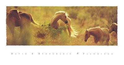 Palomini Poster di David R. Stoecklein