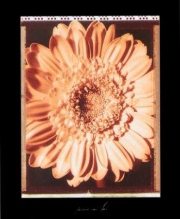 Beautiful Flower I Art by Gerard Van Hal