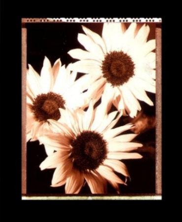 Beautiful Flower IV Prints by Gerard Van Hal