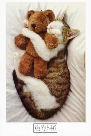 Gatto con animale da compagnia Stampe
