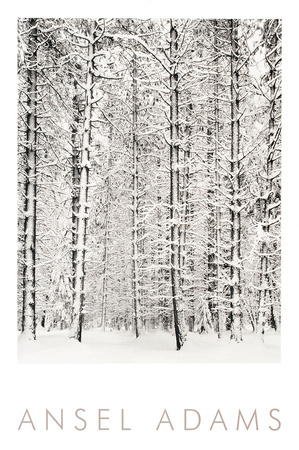 Pine Forest in the Snow, Yosemite National Park Prints by Ansel Adams