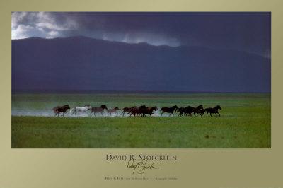 Selvaggio e libero Stampe di David R. Stoecklein