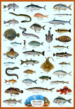 Fish sea prints for All fish names