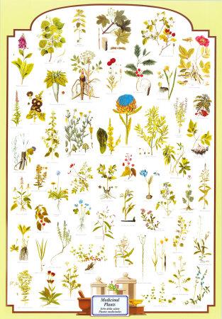Medicinal Plants Posters