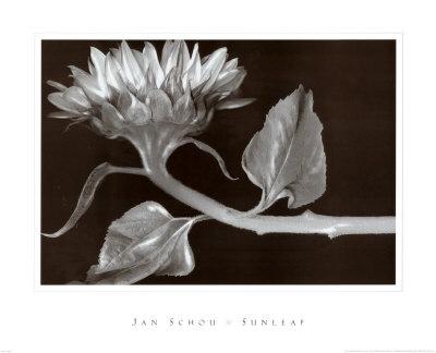 Sunleaf Poster by Jan Schou