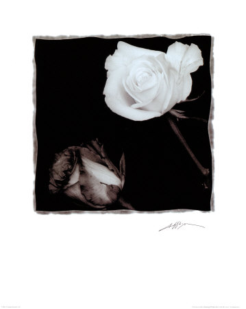 Two Roses Prints by Angelos Zimaras