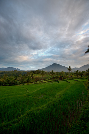 Tropical Farmland Near Ijen Crater in East Java Photographic Print by Alex Saberi