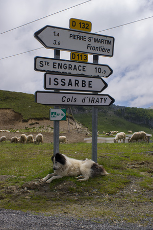 A Sheep Herding Dog Resting Under Roadside Directional Signs Photographic Print by Stephen Alvarez