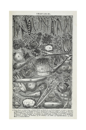 Vegetables Giclee Print by Isabella Beeton