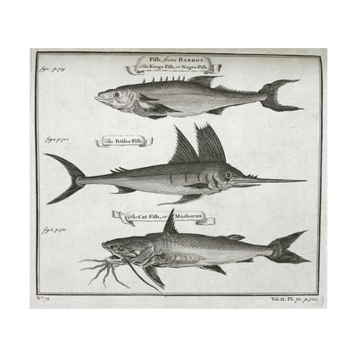 Fish Giclee Print