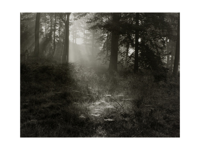 Light Shining Through Trees in Forest Giclee Print by Fay Godwin