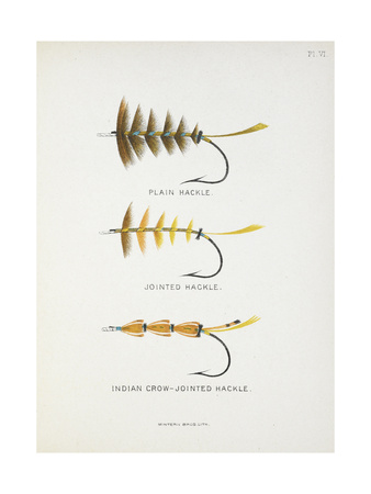 Fishing Tackle: Plain Hackle, Jointed Hackle, Indian Crow-Jointed Hackle Giclee Print by Fraser Sandeman