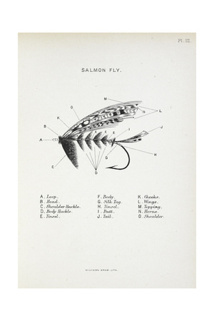 Salmon Fly. Fishing Tackle Giclee Print by Fraser Sandeman
