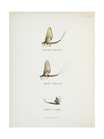 Various Insects: Green Drake, Grey Drake, Empty Case Giclee Print by Fraser Sandeman