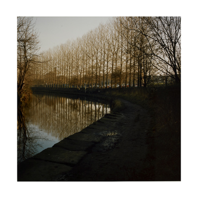 Trees Growing Along Canal in Bradford Giclee Print by Fay Godwin