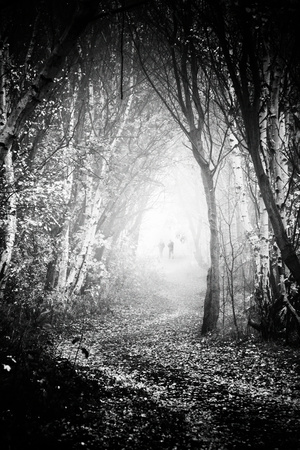 Fog Walkers in Forest Photographic Print by Rory Garforth
