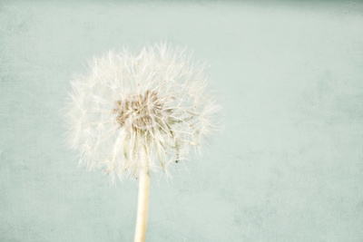 Pale Blue Wishes Photographic Print by Susannah Tucker
