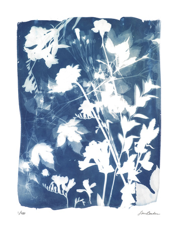 Garden Shadow 5 Giclee Print by Lois Bender