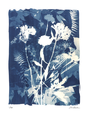 Garden Shadow 4 Giclee Print by Lois Bender