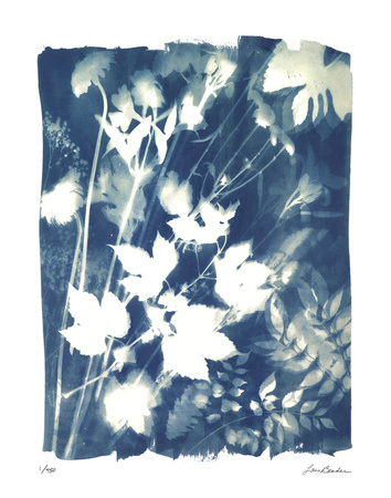 Garden Shadow 1 Giclee Print by Lois Bender