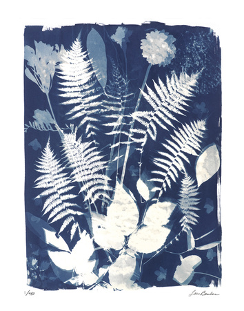 Garden Shadow 3 Giclee Print by Lois Bender