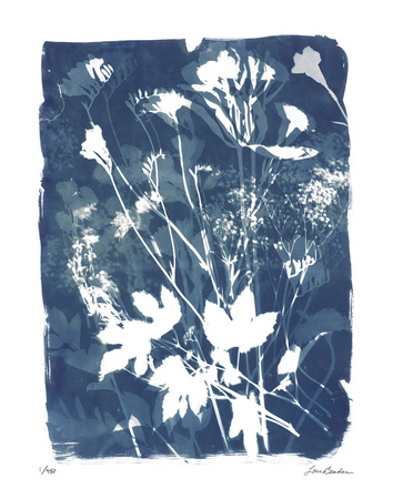 Garden Shadow 2 Giclee Print by Lois Bender