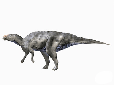 Hadrosaurus Foulkii, Photographic Print