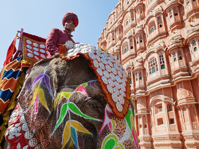 India, Rajasthan, Jaipur, Ceremonial Decorated Elephant Outside the Hawa Mahal, Palace of the Winds Photographic Print by Gavin Hellier