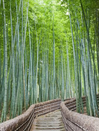 Japan, Kyoto, Arashiyama, Adashino Nembutsu-ji Temple, Bamboo Forest Photographic Print by Steve Vidler