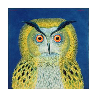 Stock Owl, 1999 Giclee Print by Tamas Galambos
