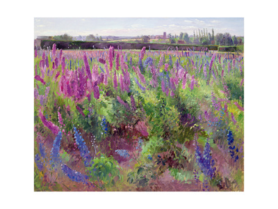 The Delphinium Field, 1991 Giclee Print by Timothy Easton