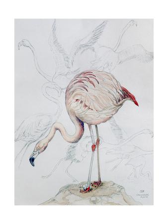 Flamingo Giclee Print by Carolyn Hubbard-Ford