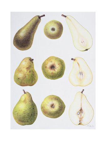 Six Pears, 1994 Giclee Print by Margaret Ann Eden