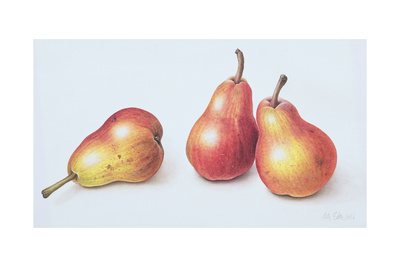 Red Pears, 1996 Giclee Print by Margaret Ann Eden
