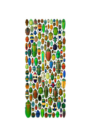Limited Coleoptera Mosaic Photographic Print by Christopher Marley