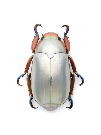 Jeweled Scarab Photographic Print by Christopher Marley