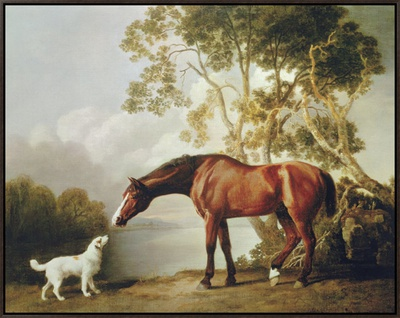 Bay Horse and White Dog Framed Canvas Print by George Stubbs
