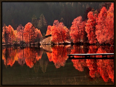 Trees Vs Trees Framed Canvas Print by Philippe Sainte-Laudy