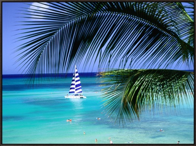 Palm Tree, Swimmers and a Boat at the Beach, Waikiki, U.S.A. Framed Canvas Print by Ann Cecil