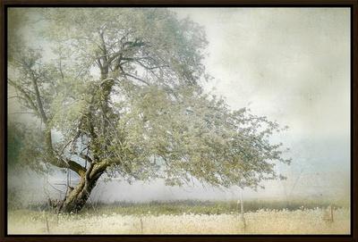 Tree in Field of Flowers Framed Canvas Print by Mia Friedrich