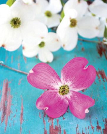 Fleurs du Matin Prints by  Fox