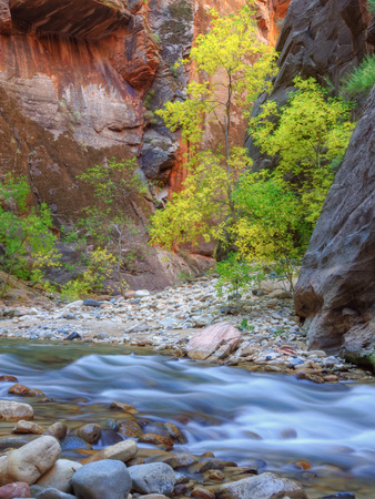 Fall Color in the Virgin Narrows Metal Print by Vincent James