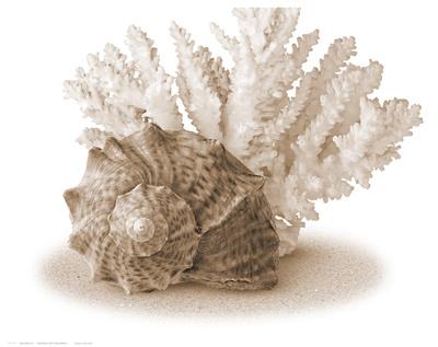 Seashells II Posters