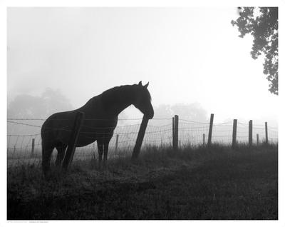 Morning Pasture Art