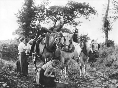 Team of Boulonnais Horses, c.1900 Photographic Print by Emile Frechon