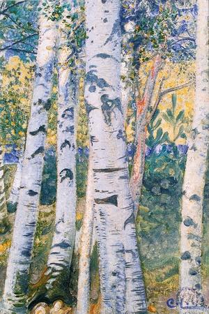 Birch Trees, 1910 Giclee Print by Carl Larsson