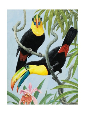 Big-Beaked Birds Giclee Print by R.B. Davis