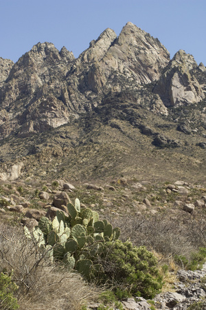 Organ Mountains Wilderness Rising Above Chihuahuan Desert Landscape, Southern New Mexico Photographic Print