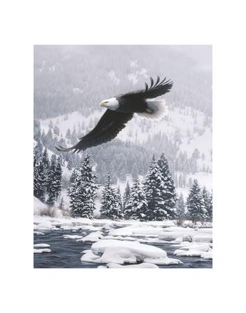 Free Flight (detail) Prints by Daniel Smith