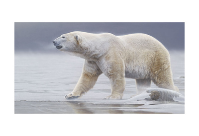Arctic Icon Prints by Daniel Smith